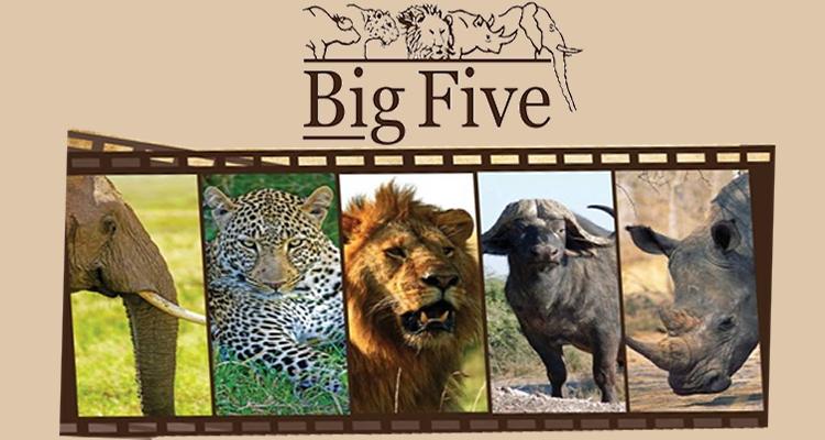 welcome to big five tours safaris ltd home page. Black Bedroom Furniture Sets. Home Design Ideas